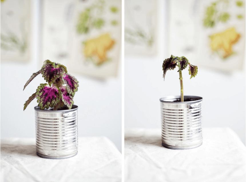 Plantbyrån träd i miniformat eller att stamma upp en växt