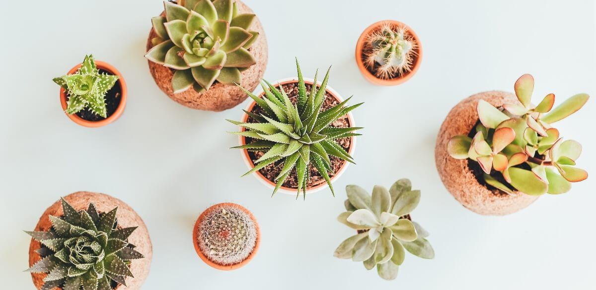 Plantbyrån_kaktusjord_ett_recept_2