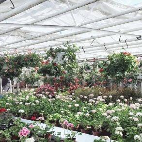 Malmös bästa växtbutiker