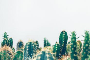 Skötsel kaktus Plantbyrån