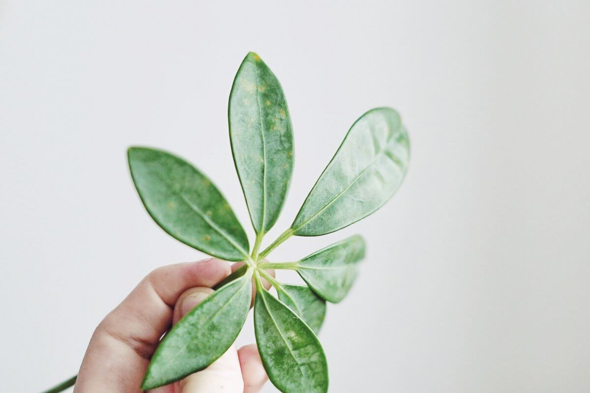 Plantbyrån karantän krukväxter