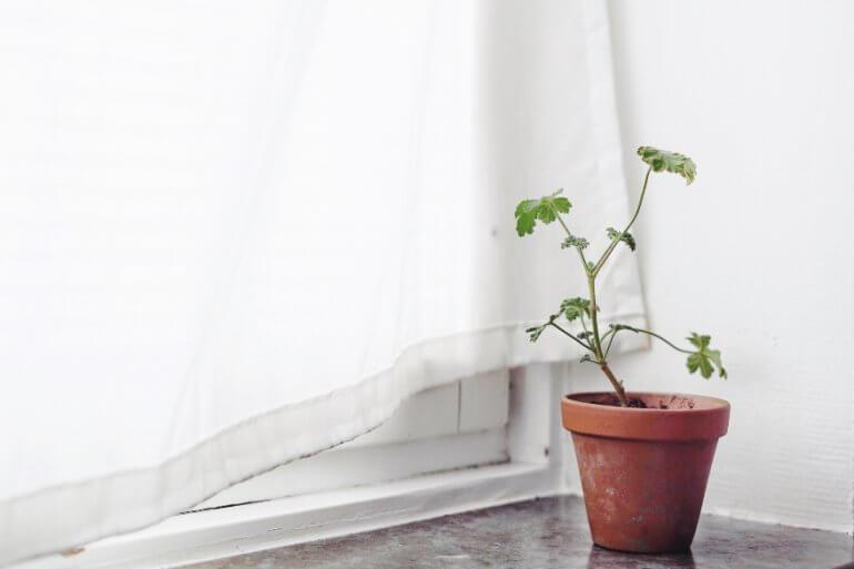 Plantbyrån krukväxter karantän