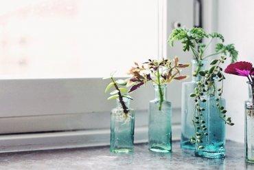 Stora sticklingskolan: så tar du sticklingar på dina växter