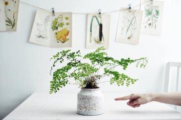 Växter för norrfönster Plantbyrån