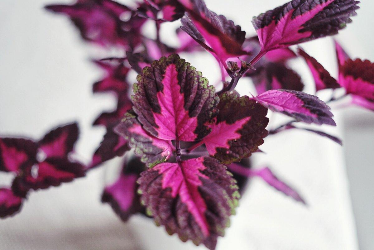 Plantbyrån övervintra krukväxter