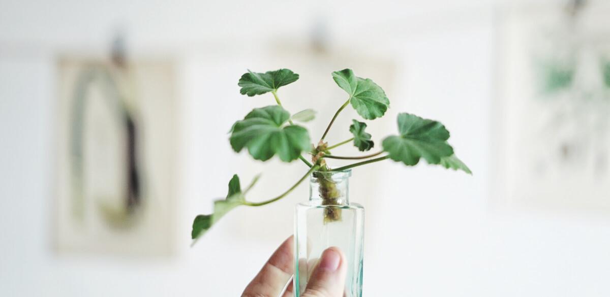 Plantbyrån övervintra växter