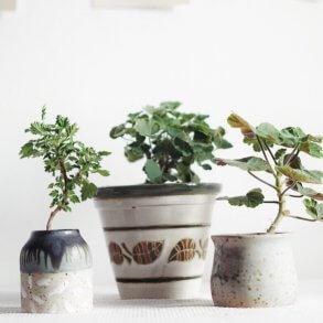 Växtbelysning Plantbyrån