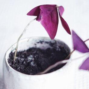 Plantbyrån mögel