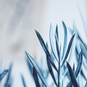 Plantbyrån skötsel suckulenter