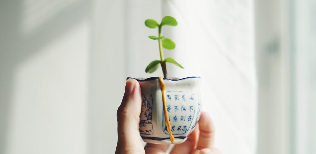 Trendspaning krukväxter 2020