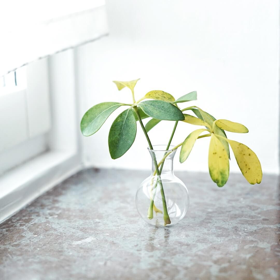 Paraplyaralia Plantbyrån