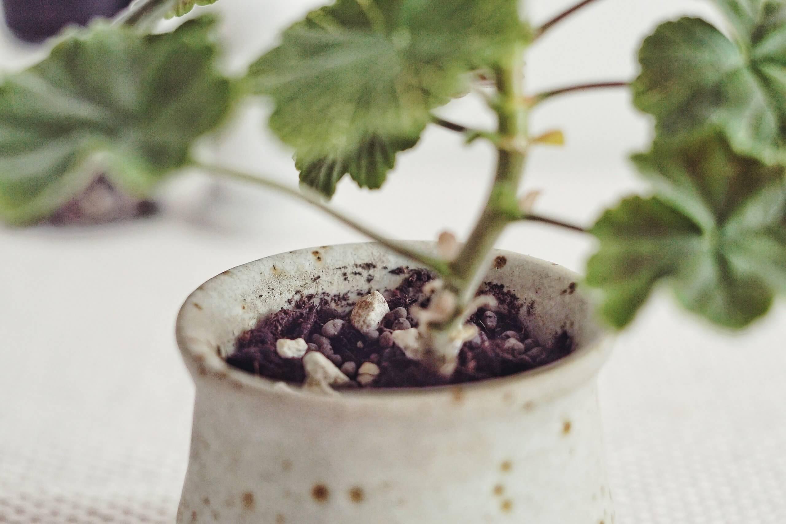 Plantera om krukväxter