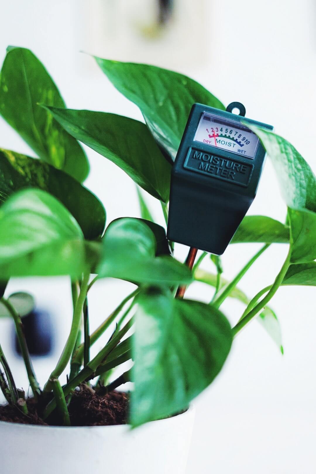 Använda fuktmätare på krukväxter.