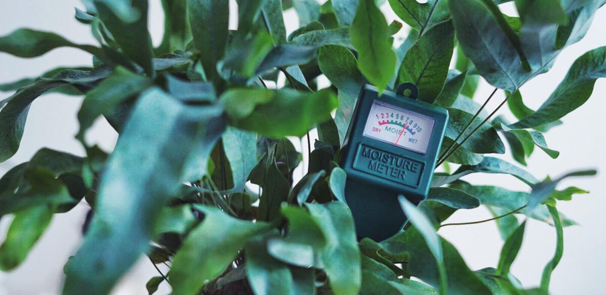 Fuktmätare för krukväxter