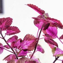 fläta palettblad Plantbyrån
