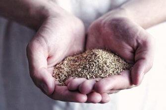 vermiculite kruväxter