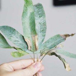Luftfuktare krukväxter