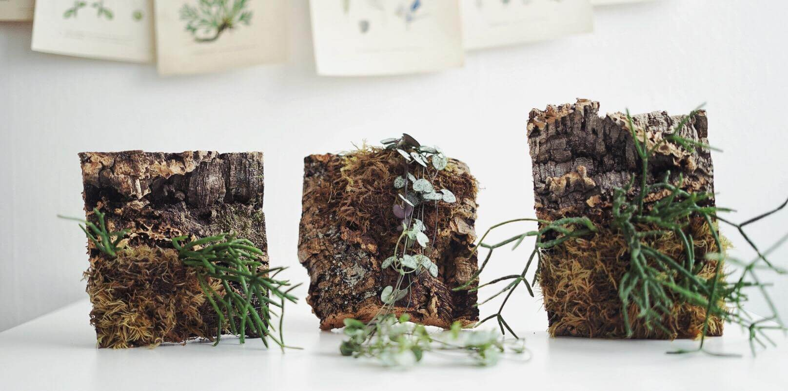 Gör en egen växtvägg inomhus