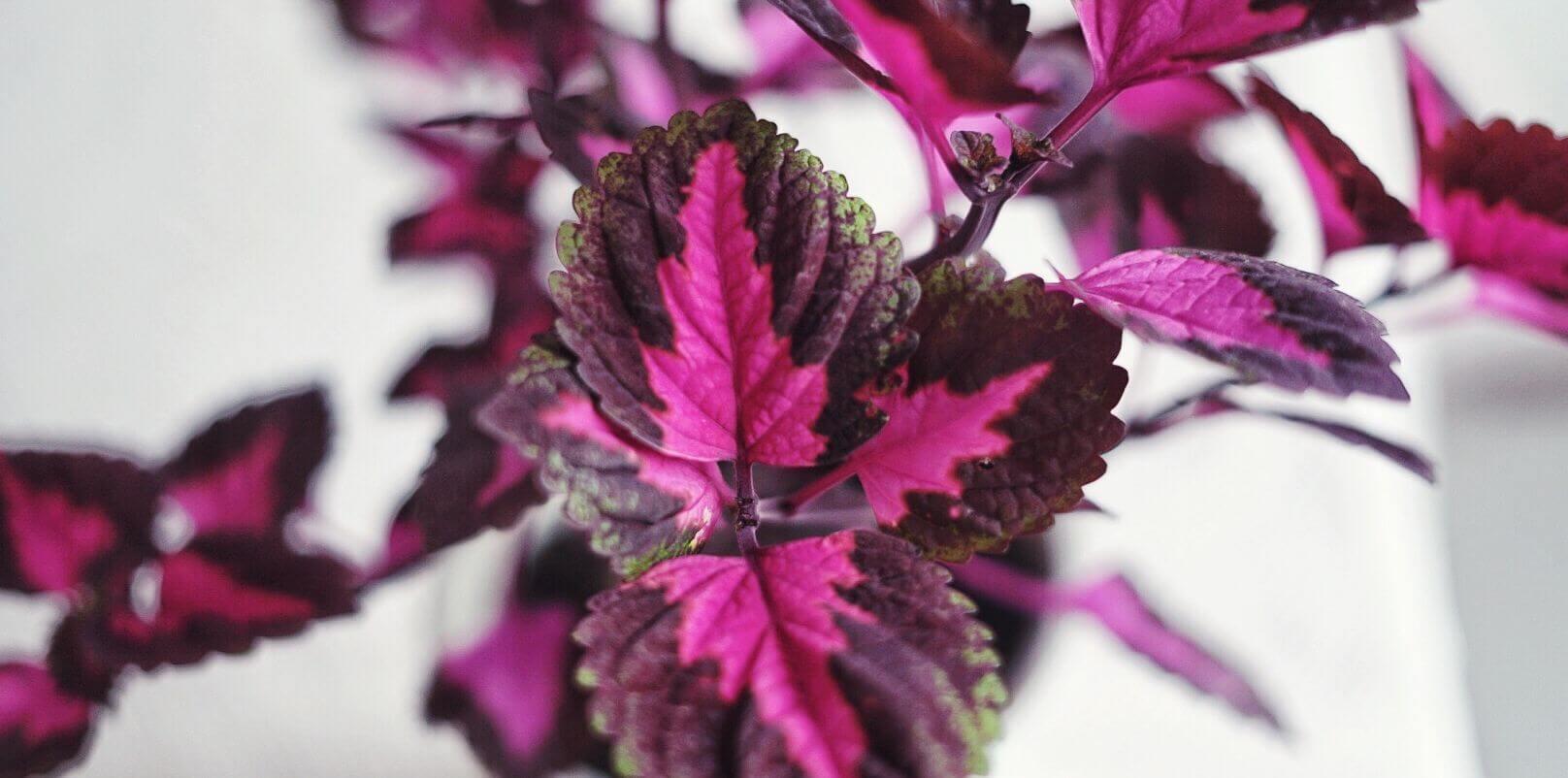 Ha palettblad utomhus